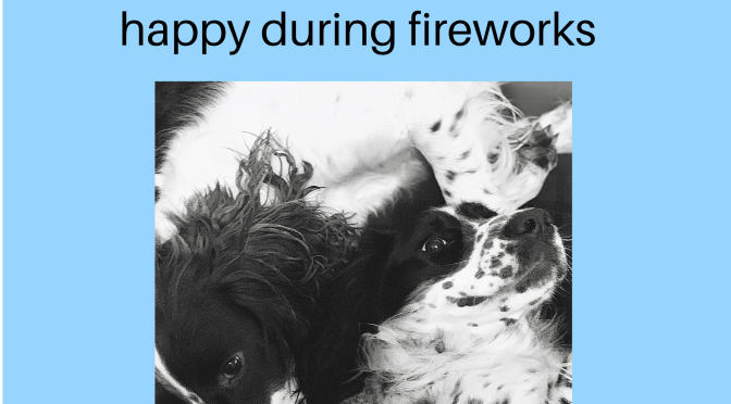 Keeping your dogs safe during fireworks